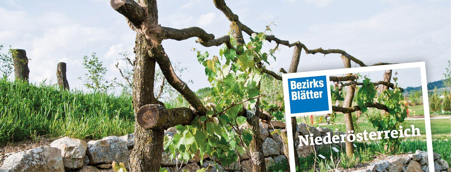 Bezirksblätter Niederösterreich: Tarif, Kontakt, E-Paper, meinbezirk.at, Mediadaten, Streuliste, Beilagen, Technische Daten